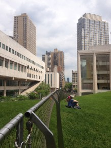 """the Lincoln Centre's Green Roof """"meadow"""""""