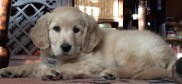 New Pup