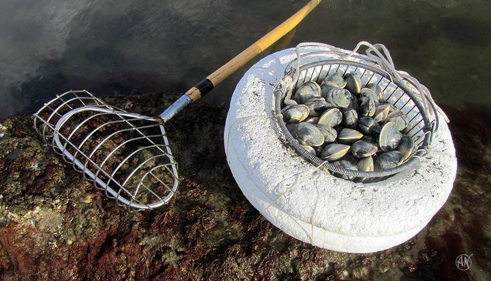 clams_1303