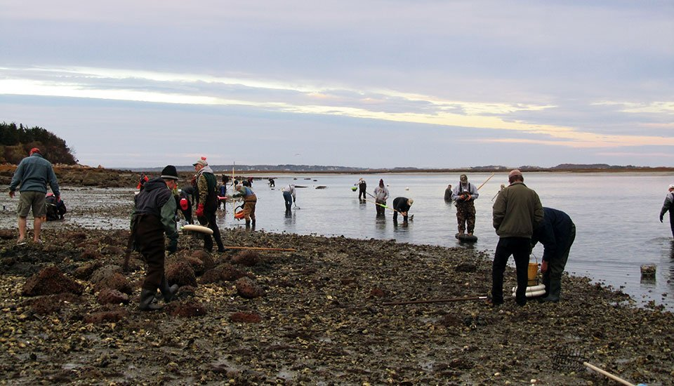 oystering_1283