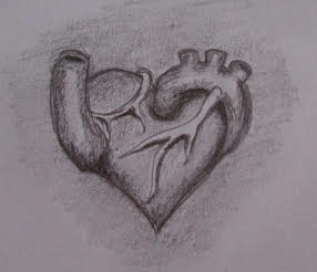 Anatomical heart sketch