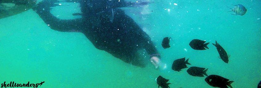 Fish feeding while snorkeling