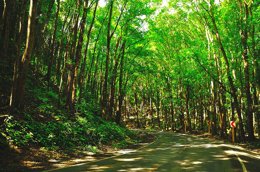 Bilar Man Made Forest Bohol