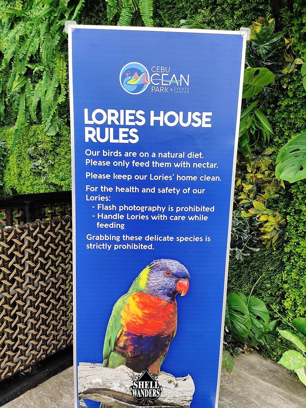 Bird Feeding Lories Cebu Ocean Park
