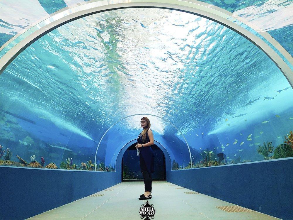 Inside Oceanarium Cebu Ocean Park