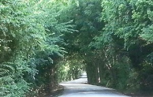 old road path