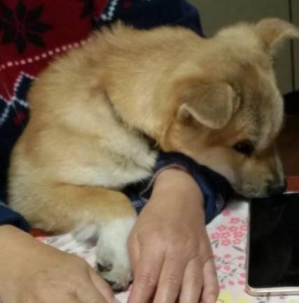 岡山の保護犬あおの一日抱っこ