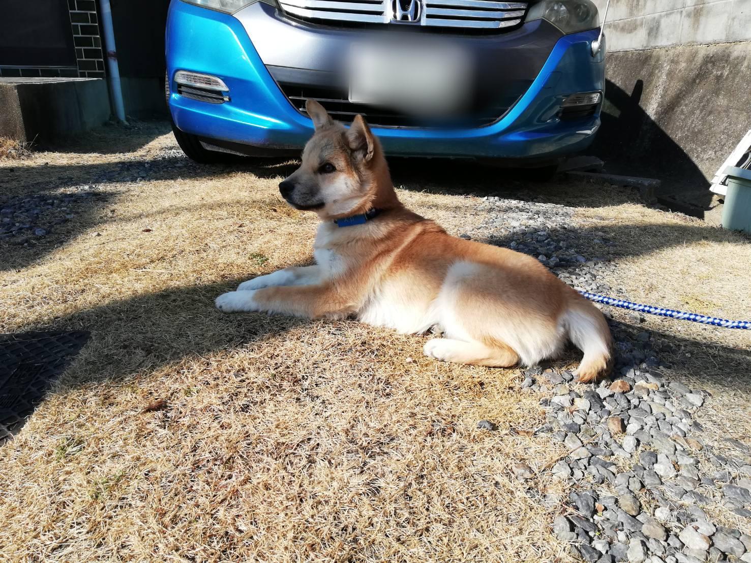 岡山保護犬あおの1日日向ぼっこ