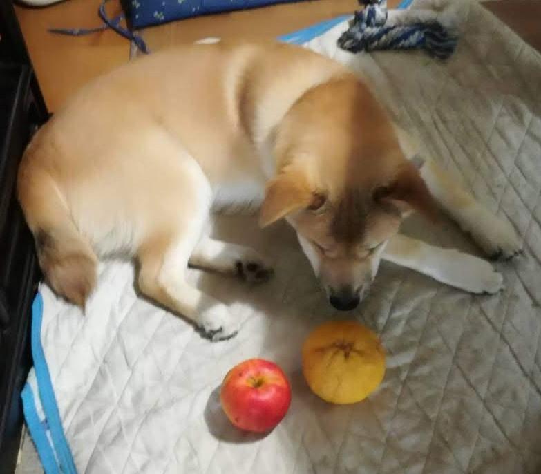 岡山保護犬あおの一日、去勢手術その後エリザベスカラーも取れた
