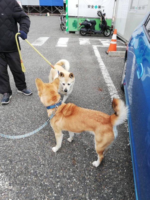 岡山 保護犬 あお 天神山文化センター