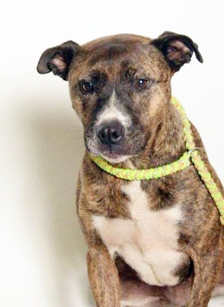 Ophelia, a staff favorite, is available for adoption
