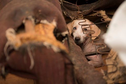 Over 170 animals rescued from suspected puppy mill operation