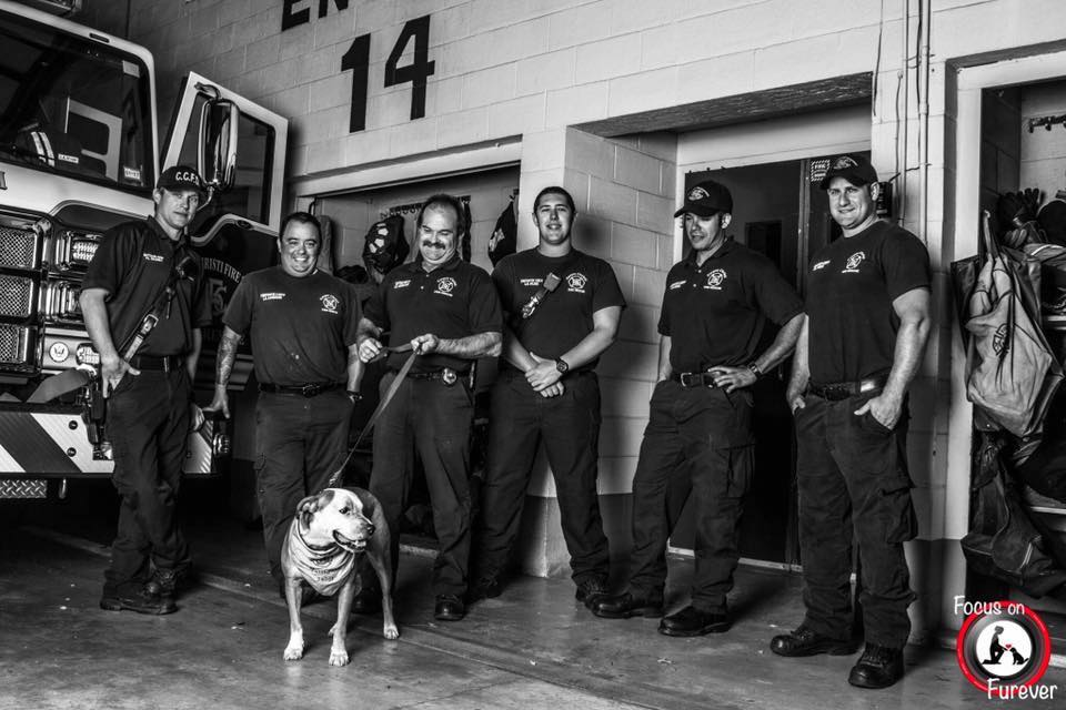 Shelter Dog Rescued By Firefighters To Receive Final Gift