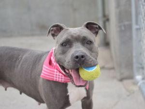 Iris at Brooklyn ACC