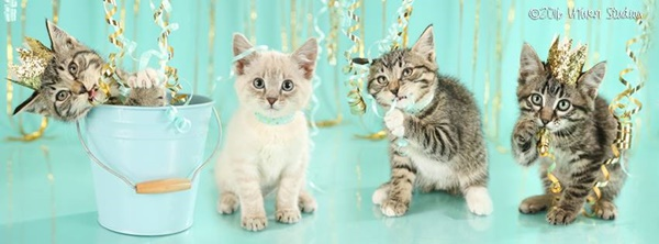 The Model Pet Project is Boosting Adoptions at Humane Society of Southwest Missouri