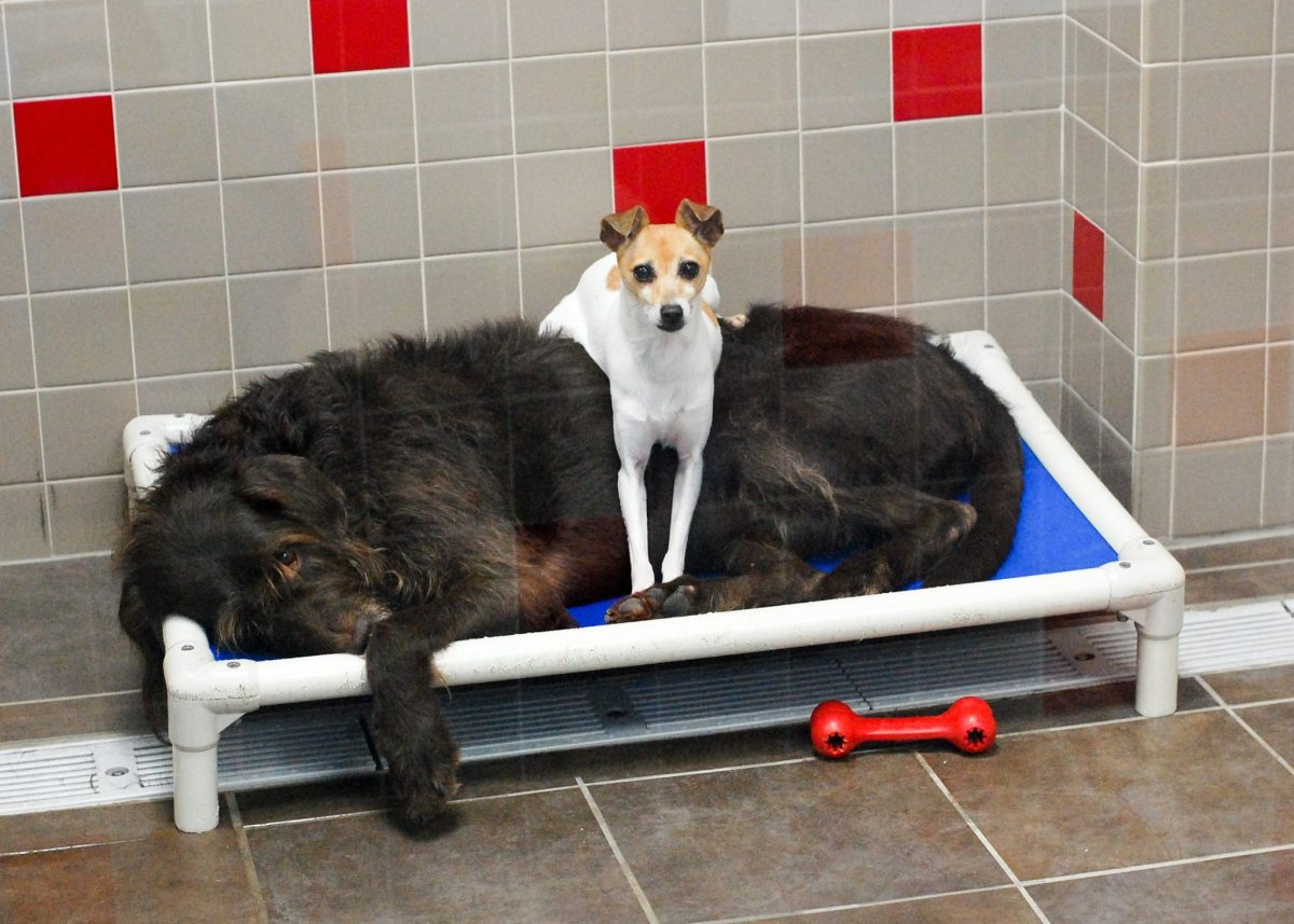 Dogs Often Pictured Cuddling at Iowa Animal Shelter Get a Loving Home…Together!