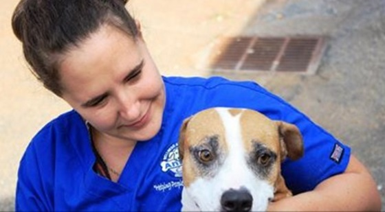 Greenville County Animal Care To Help Charleston Pets Displaced By Hurricane Matthew