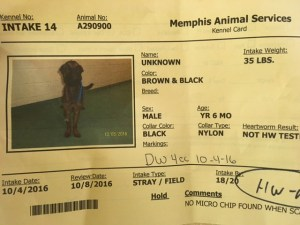 Kennel card with no breed listed