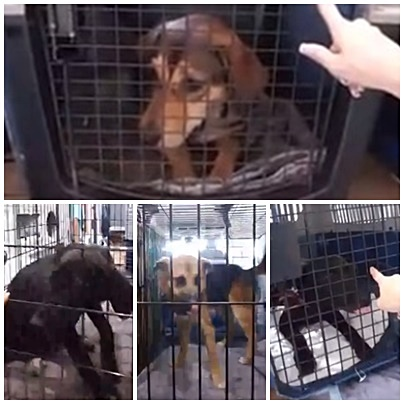 Riley, Gator, Jada and Ivy are safe with Upstate rescue groups