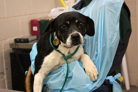 79 Dogs Transferred From Over-Burdened Texas Shelter To Colorado Rescue Agency