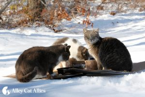 3-cats-in-winter