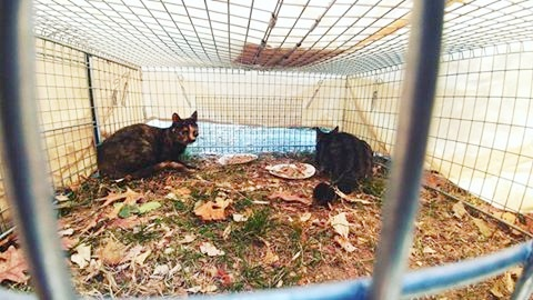 Feral cats rescued near Chimney Rock, NC