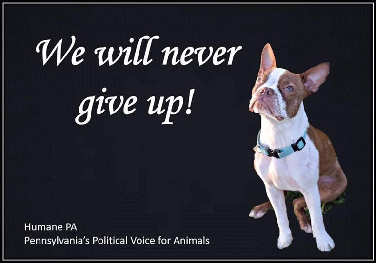 Pennsylvania Animal Welfare Bill, Libre's Law, Fails To Pass, Pushed Off Legislative Table By NRA