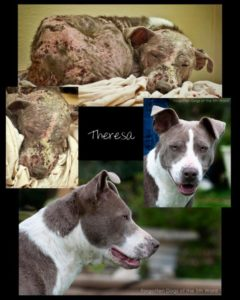 Another before and after picture of rescued dog