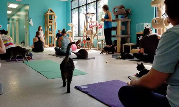 Cat Yoga Classes Are A Big Hit At This Cage-Free Shelter
