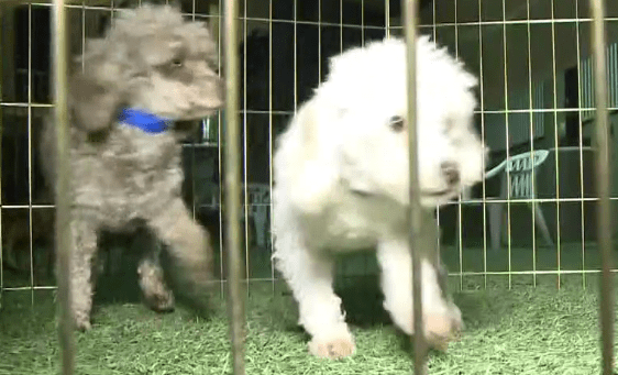 Dogs Get A Second Chance After Being Rescued From Puppy