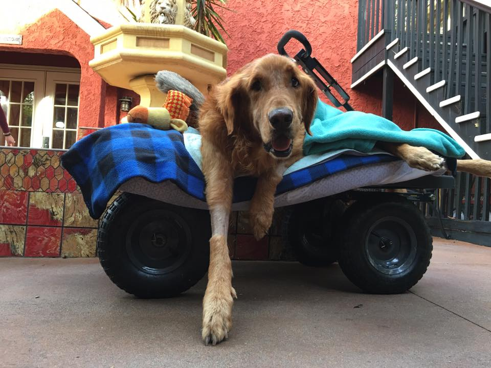Maverick, The Beloved Dog In The Wagon, Has Passed Away