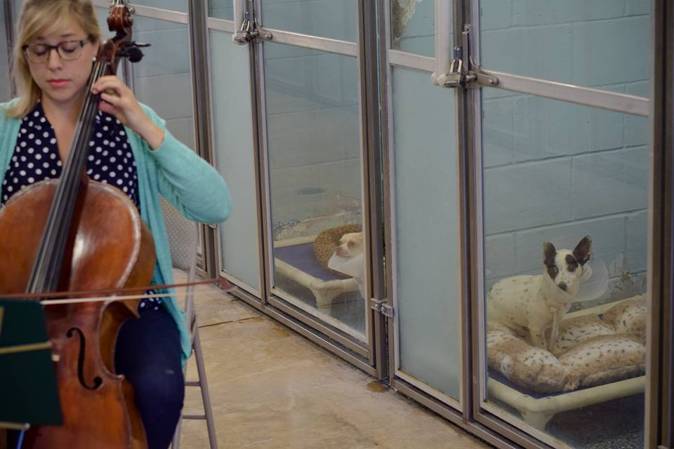Shelter Animals Treated To Special Performance By Cellist