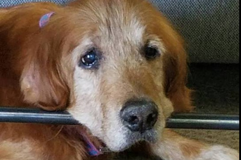 A Final Good-bye, Beloved Shelter Dog Who Enjoyed Fun Bucket List Has Died