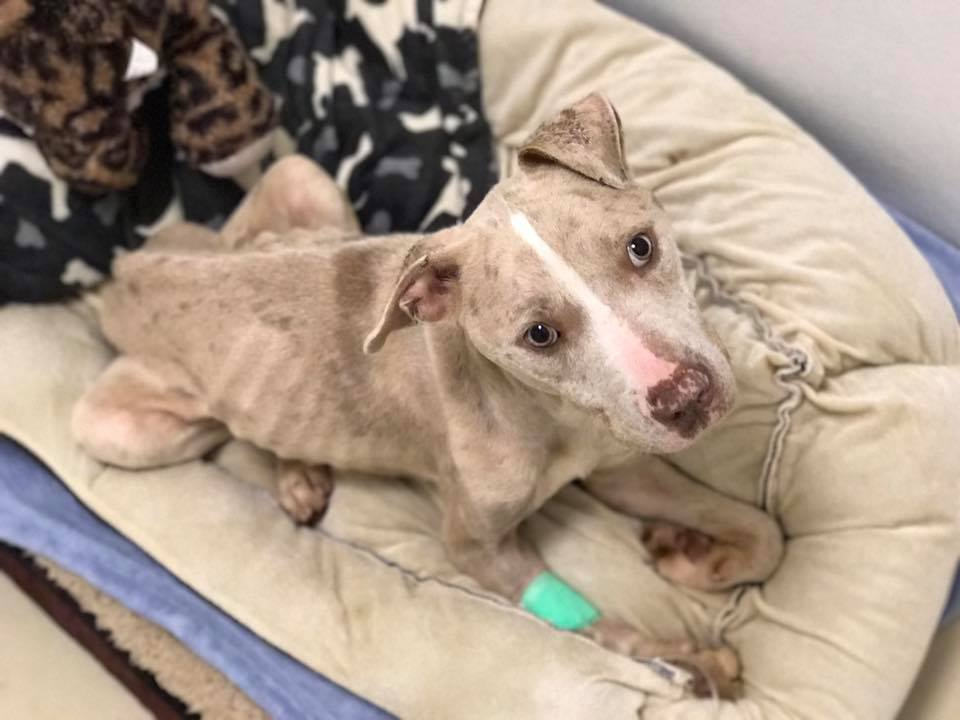 Charleston Animal Society Takes In Seized Dogs From Neglectful Home