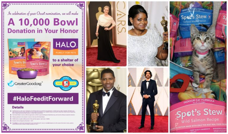 Shelter Pets Get Thousands of Free Bowls of Halo Pet Food, Thanks to Oscar Nominees