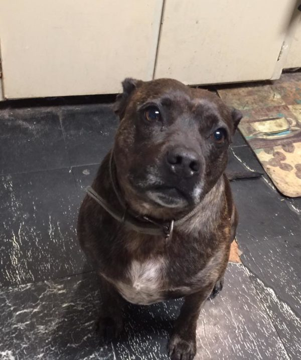 Mystery Dog Over 2000 Miles From Home — Do you Recognize Him?