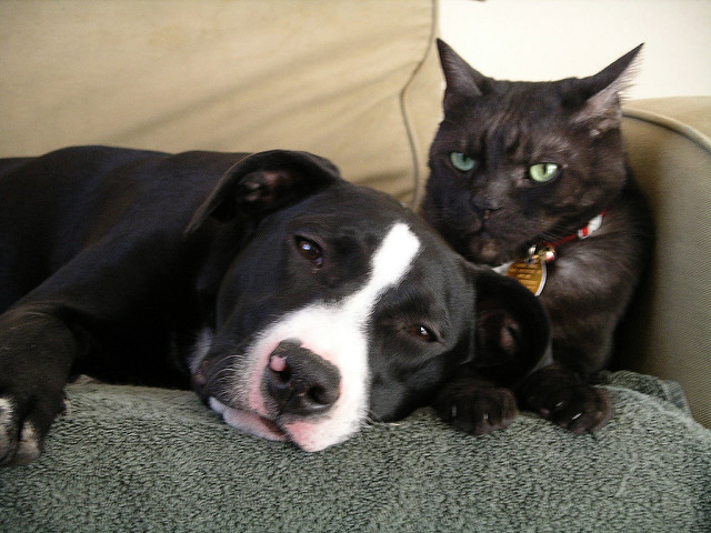 How To Figure Out Which Dogs Get Along With Cats? A New Study Sheds Some Light