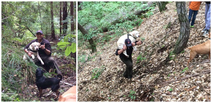 Man Saves Elderly, Blind Dog Lost In Woods For 8 Days, Donates Reward To Animal Charity