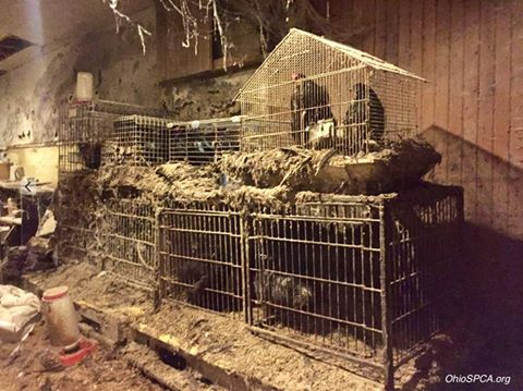 Ohio Shelter Rescues Hundreds Of Animals From House Of Horrors