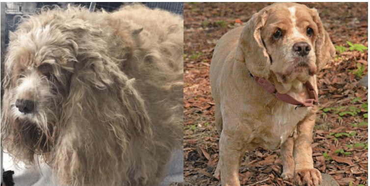 Let's Celebrate These Incredible Shelter Dog Makeovers!