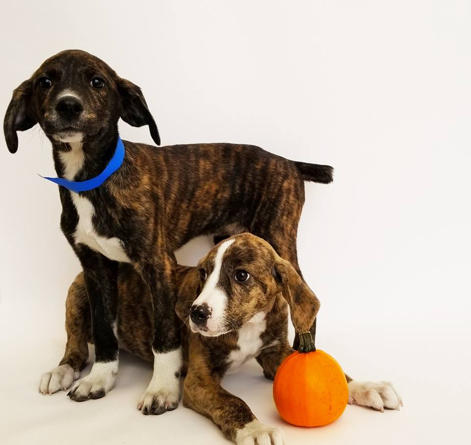 Adoption Center Offers 'Pop Up Puppy Play Dates'