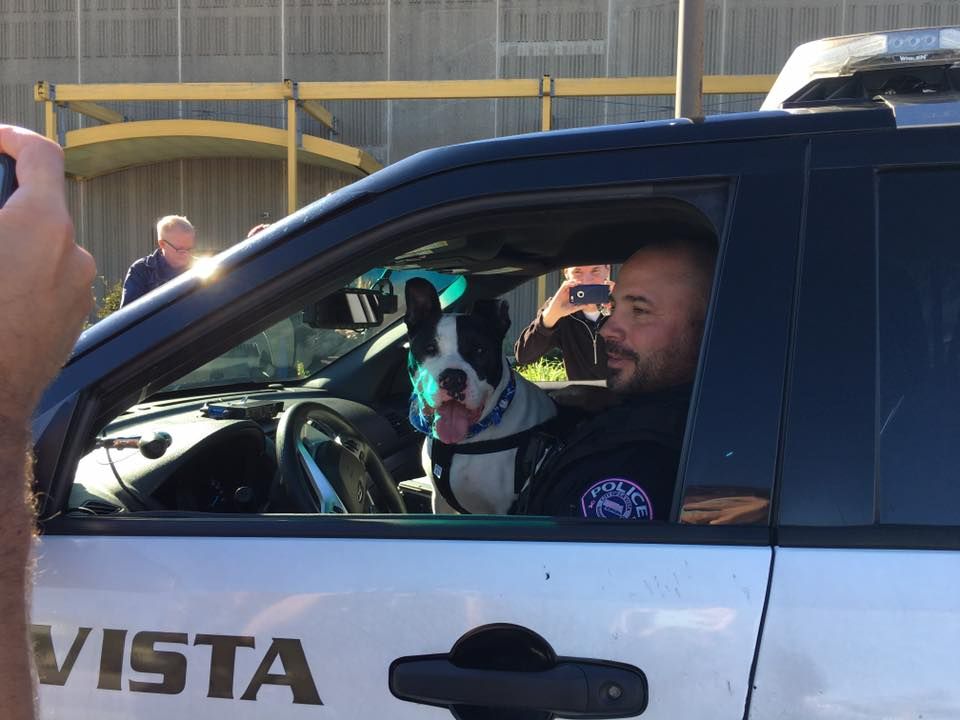 New Program Pairs Police With Shelter Dogs To Promote Pet Adoption