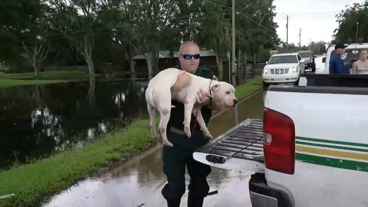 Deserted By Owners, Hurricane Irma Dogs Find New Homes