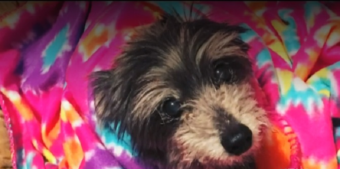 Woman Shocked To Discover Elderly Dog She Adopted Used To Be Hers