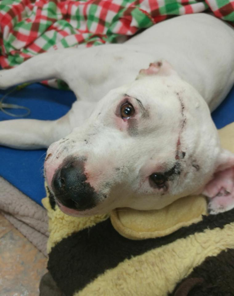 Miraculous Survival – Dog Alive After Being Hit By A Train