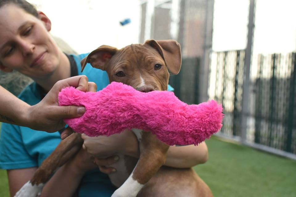 Proposed Bill Would Make NYC Pet Stores Sell Only Shelter Cats And Dogs