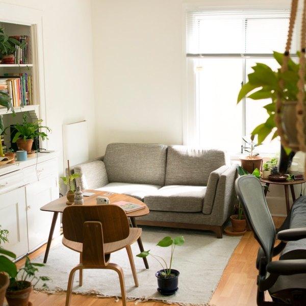 Houseplant Interior