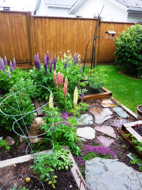 Heading out to the studio to grab a photograph, I enjoy my garden in the rain.