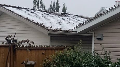 Birds in Snow September 9 2014