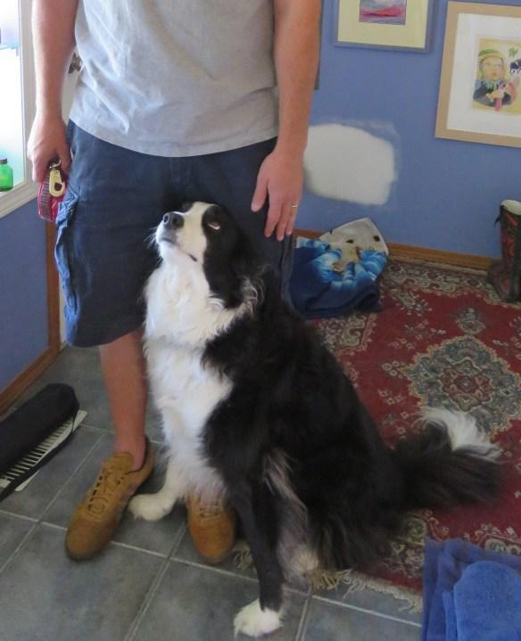 Kath's Canon July 18, 2015 Max Dog Walker Steve 012 cropped